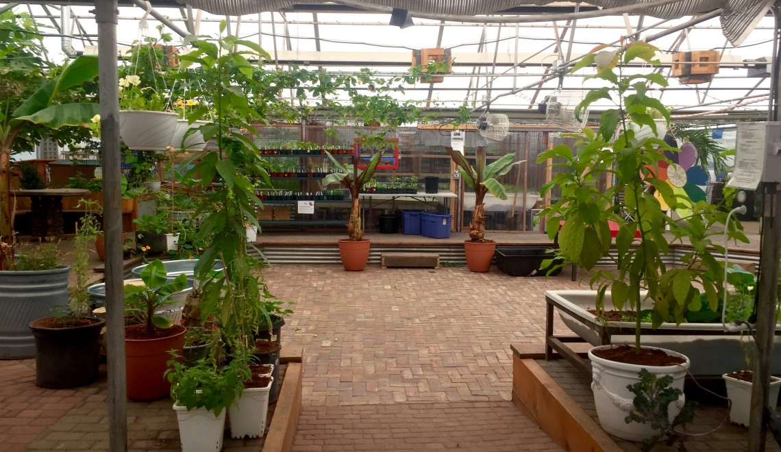 Interior of the GrowHaus greenhouse.  Photos by Veronica Penney